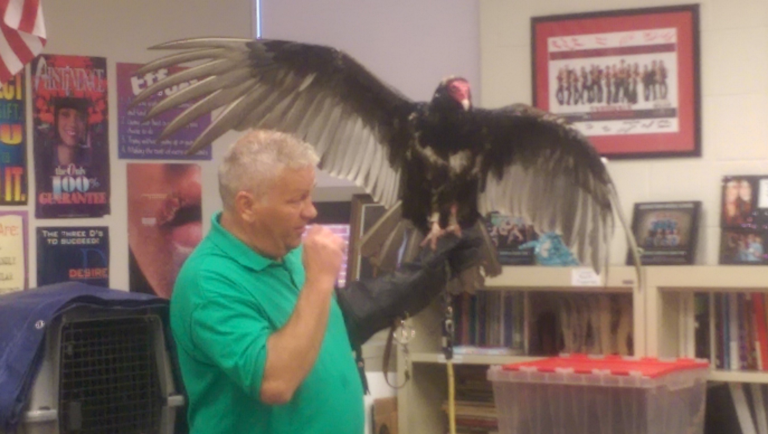 Animal Club Presentation - Vulture